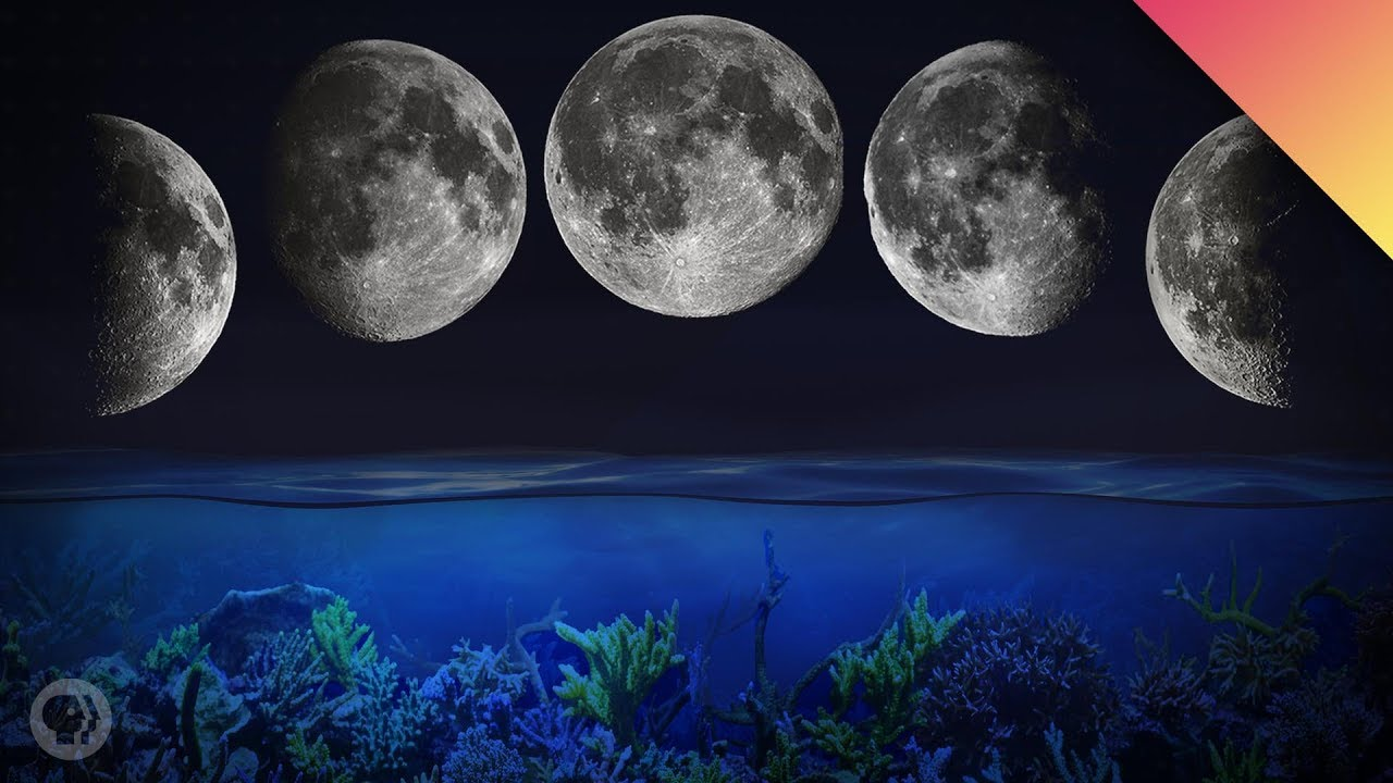 How The Moon Controls Biological Cycles