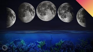 Why Some Animals Follow The Moon
