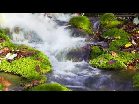 100% TERAPI RELAKSASI SEPERTI DI HUTAN (VIDEO HD)