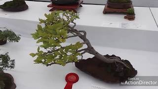 BONSAI MAME DUNIA
