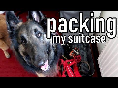 Belgian Shepherd Packs His Own Suitcase - Amazing DogTrick