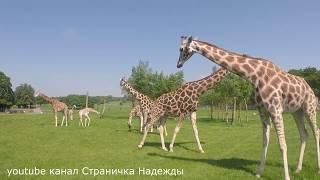 Интересный зоопарк Ч1