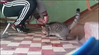 Бездомные котята , нельзя пройти мимо.