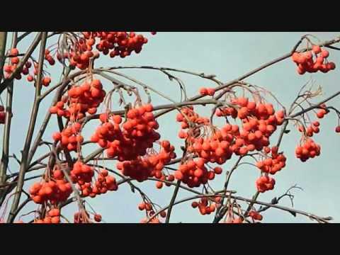 ROWAN TREE  JIM REID