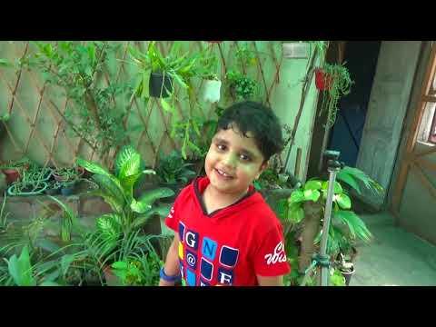 Inspiration for Children   keep interest in gardening