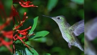 The Hummingbird 60 Meal-a-Day Diet
