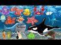 Pelajari nama dan suara hewan laut | Animasi gambar binatang untuk anak-anak: lumba-lumba, hiu, paus