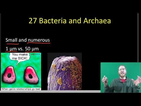 AP Bio Chapters 26-27 Part 2