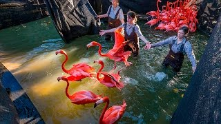 Keeping Flamingos In The Pink