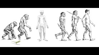 EVOLUZIONE RETTILIANA - Dalle origini preistoriche agli avvistamenti in Italia nel fiume Po