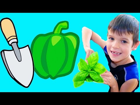 KIDS Family Fun Summer Fun Activity GARDENING ~ DIY Planting Fun Ideas for Outside Things To Do