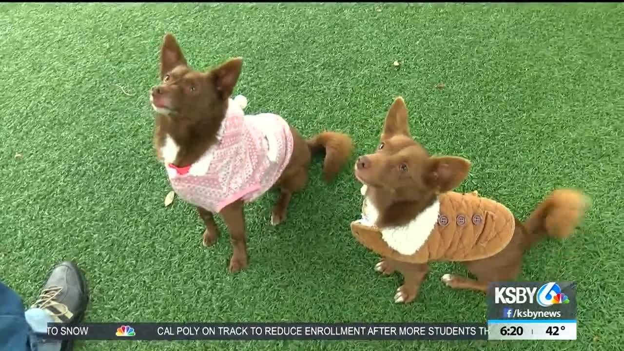 Pet Tales: Meet Bonnie & Clyde
