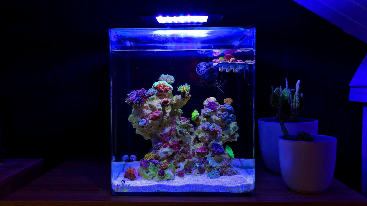 Nano Reef Tank No Skimmer Update Month Three