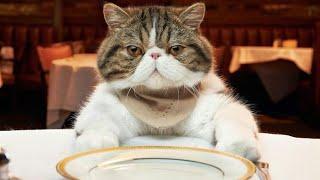 Как приготовить корм для кошек / В домашних условиях / Это моё 2 видео не судите строго!