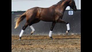 Virtual Zone Horses I