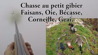 Chasse dans les marais (Oies, Canard, faisan) - F&S chasse