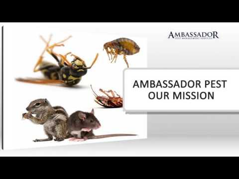 Pest Control Space Coast 321-250-9993 8501 Astronaut Blvd Cape Canaveral, FL 32920 Ambassador Pest M