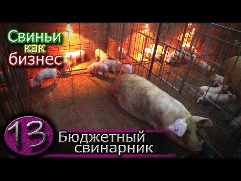 С чего начал свиноводство
