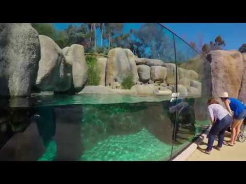 Africa Rocks July 2017 San Diego ZOO