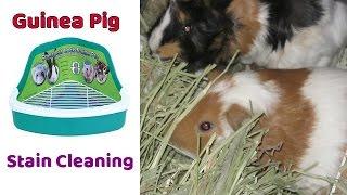 Guinea Pig Litter Training & Stain Removing