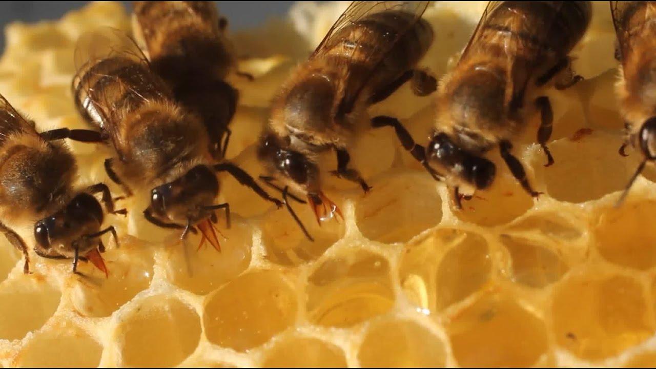 The Bee Dance - Inside Science.