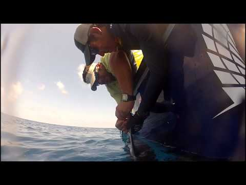 Shark Tagging: Wyatt the Scalloped Hammerhead