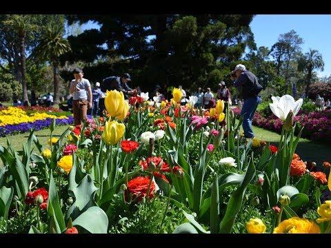 Toowoomba Flowers Festival 2017