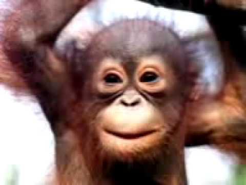 Monkey Singing Happy Birthday Song Funny