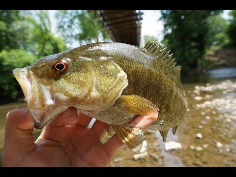 How To Fish A Creek (Alum Creek, Ohio)