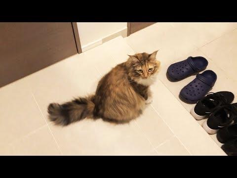 2日お留守番した猫の反応が意外だった!