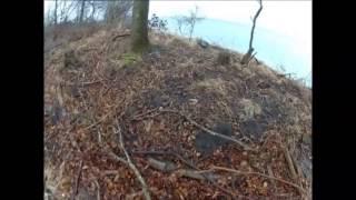 Jagt Med Ft. Cocker Spaniels