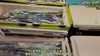동양호 왕갈치조황 만쿨~통영먼바다 조황