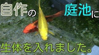 庭池にお魚さん達を入れました【池作り】 thumbnail