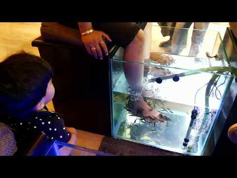 Fish Spa Therapy And Its Advantage फिश स्पा थेरेपी से होने वाले लाभ।।