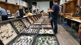 Смотреть видео 13 выставка ярмарка насекомых, 13 Международная Выставка Ярмарка насекомых  Москва онлайн