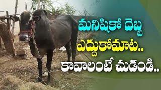మనిషికో దెబ్బ - ఎద్దుకోమాట  కావాలంటే చుడండి   | ABN Telugu