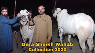 Gambar cover Big Kheera Bull Of Dera Sheikh Wahab || Collection 2020 || Sold From Pappu Cattle Farm || Unloading