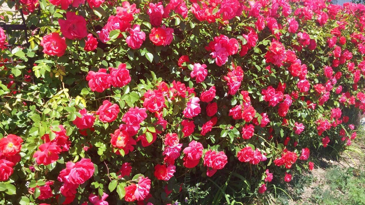 В нашем разделе вы найдете объявления о продаже саженцев плодовых деревьев и кустарников, а также о продаже рассады цветов. Здесь мы можете купить рассаду клубники, малины, купить саженцы роз или саженцы винограда, купить семена томатов, огурцов, перца и многих других культур. В разделе.
