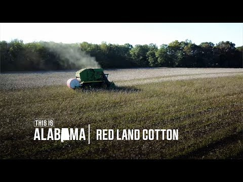 Red Land Cotton | This is Alabama