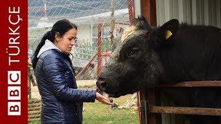 Türkiye'nin ilk ve tek 'kurtarılmış çiftlik hayvanları barınağı': Angels Farm Sanctuary