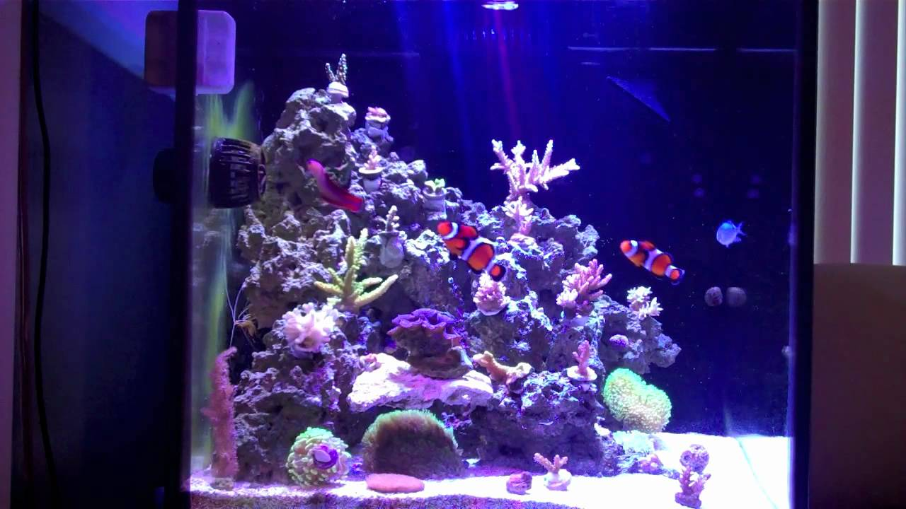 The Reefer's 27g Marineland Cube - YouTube