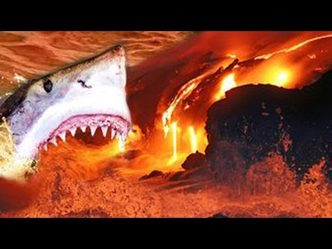 Amazing Shark Discovered Swimming In Active Volcano – Caught On Camera