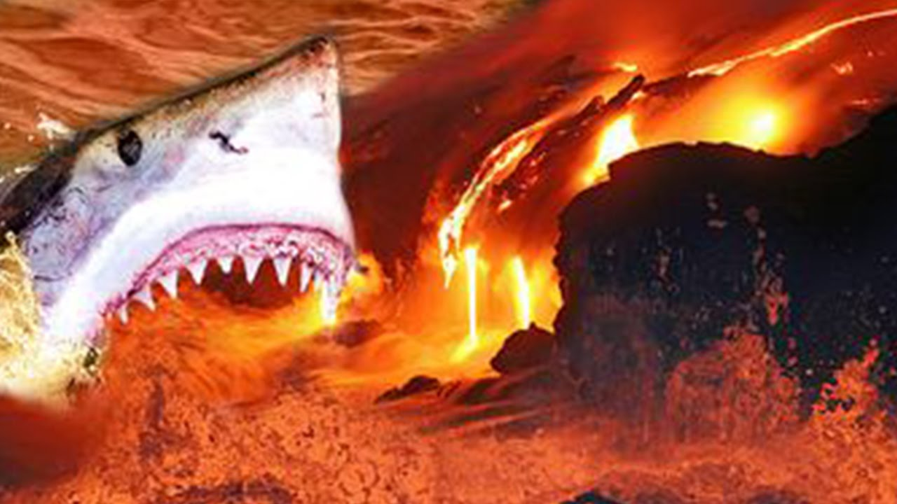 Amazing Shark Discovered Swimming In Active Volcano