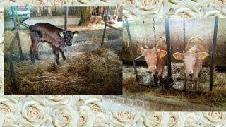 Moje zwierzęta i ja.1#