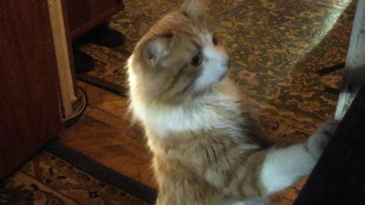 в маске кота пугает котов