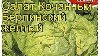Салат кочанный Берлинский желтый. Краткий обзор, описание характеристик lactuca sativa
