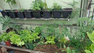 6 Dicas Essenciais Para o Sucesso na Horta em Vasos