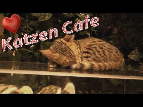 Katzen Cafe Harajuku/Tokio