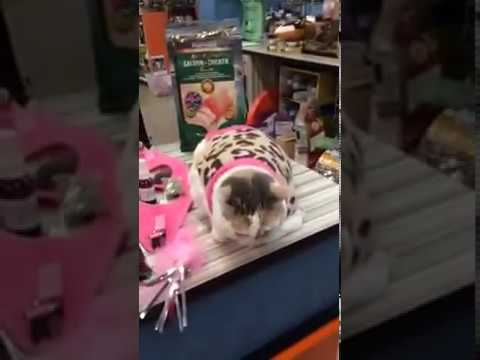 Kali-Ma the Cat 🐱 shopping!