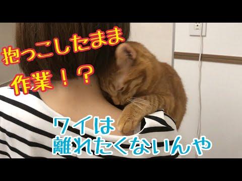 作業中も抱っこされて離れない猫が可愛すぎるんです!